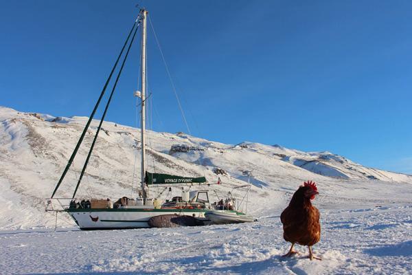 Wildes Huhn und cooler Skipper